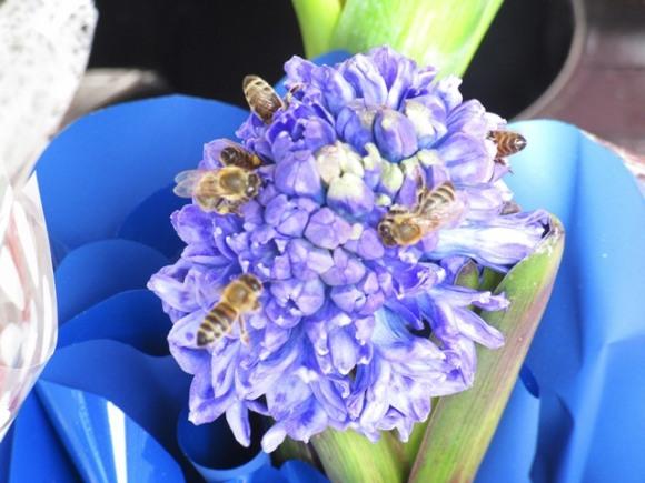 Днес пчели, утре щъркели.